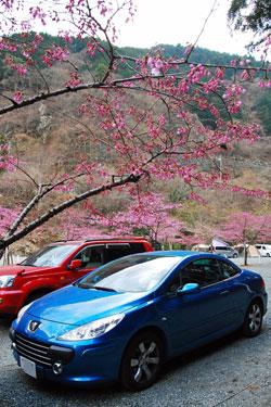 Sakuratopuzyo