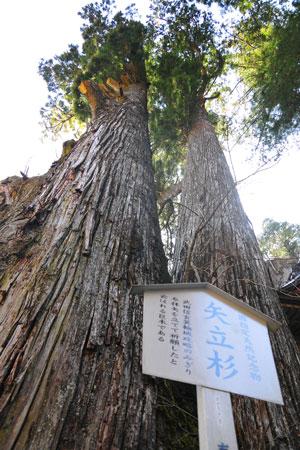 Yatatesugi